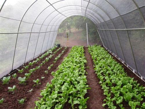 Greenhouses Affordable Galvanized Vegetable Tunnels Was border=